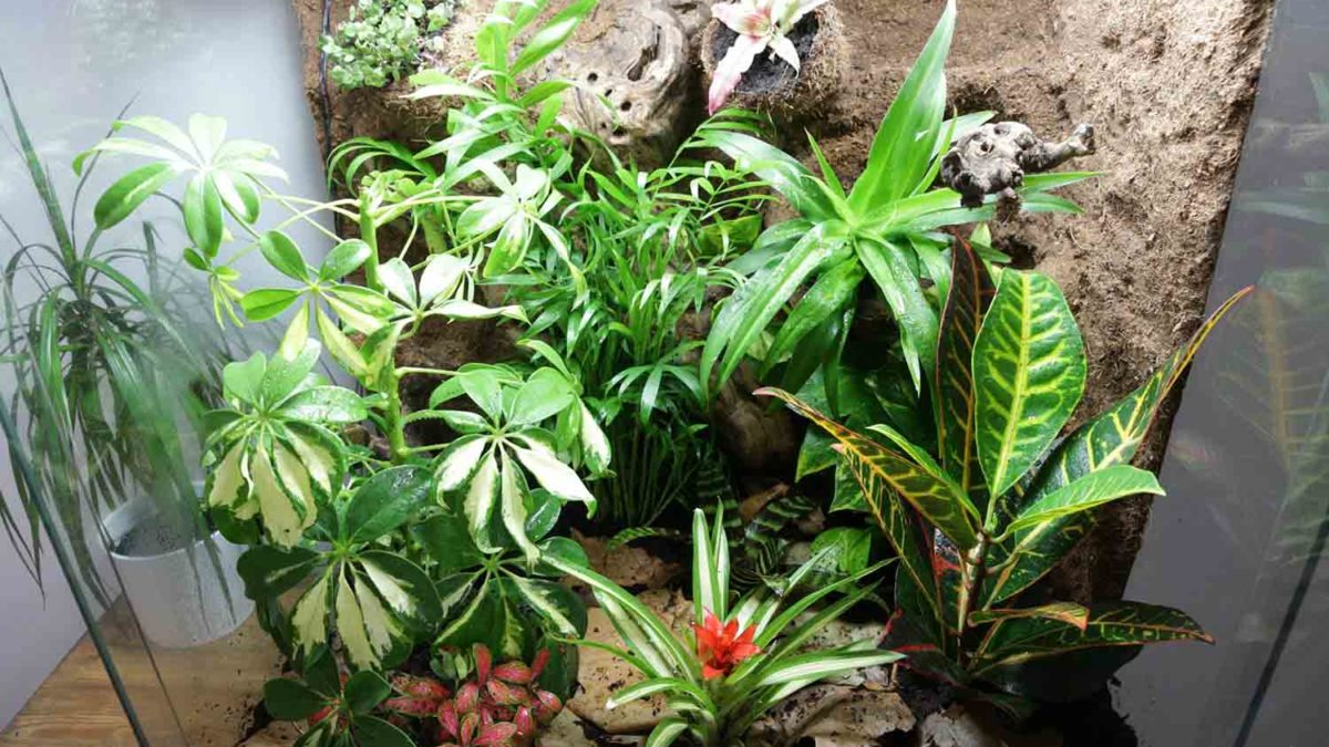 Best Plants For Gecko Habitats Zoo Reptilia